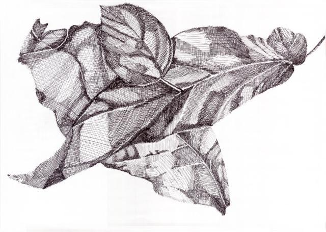 leaf01Crop