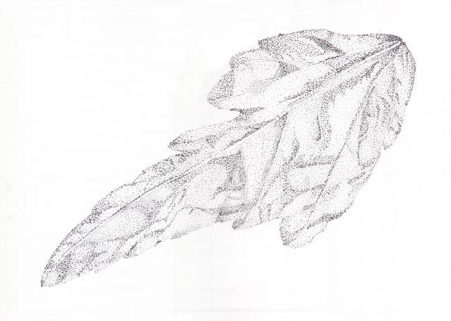 leaf02Crop