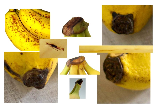 banana_010