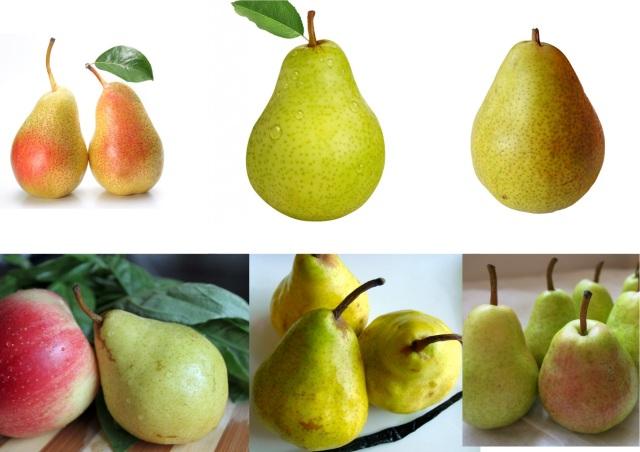 pear_011