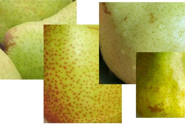 pear_012